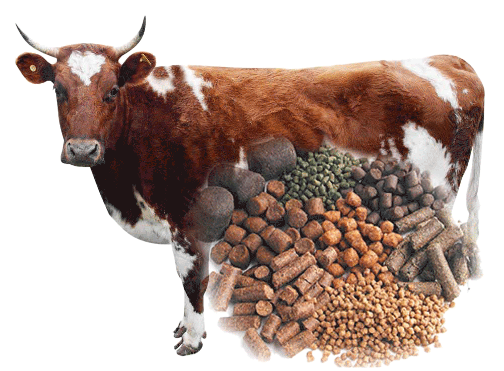 Animal Feed & Dairy Products